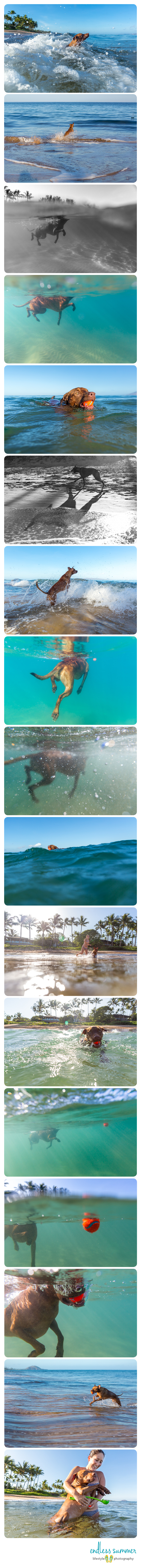 Hawaii Underwater Dog Photography